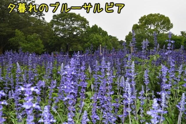 d-D75_6002.jpg
