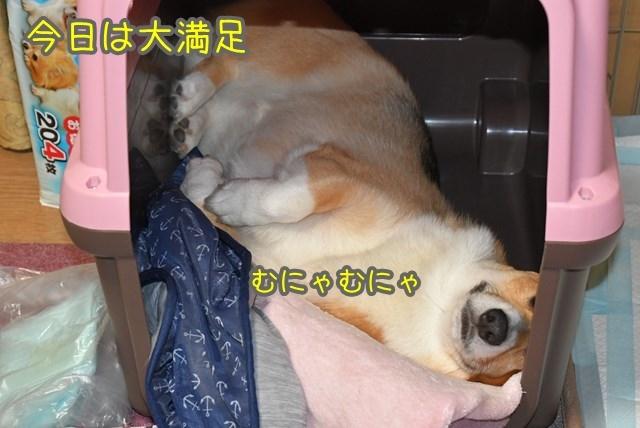 d-D75_6592.jpg