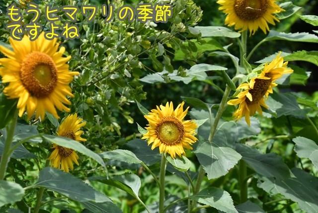 d-D75_6608x.jpg