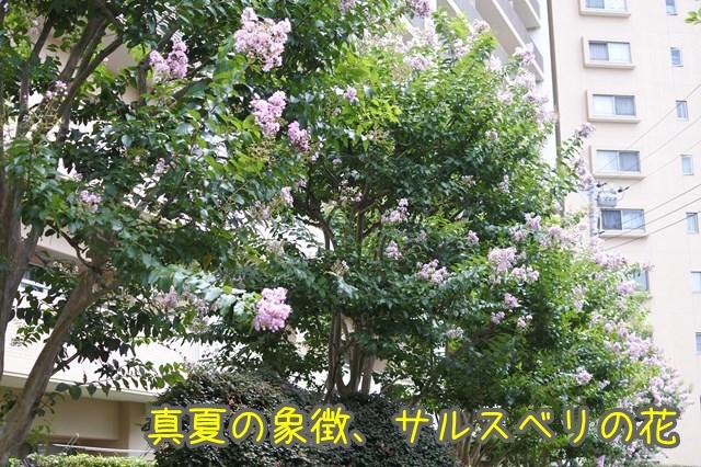 d-DSC_2614.jpg