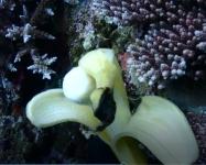 banana2104.jpg