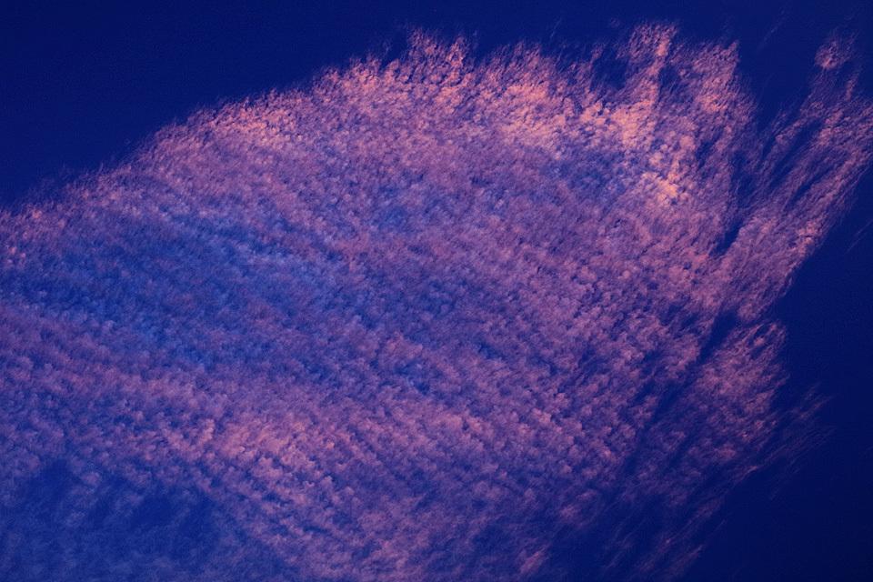 夕映えの巻積雲 ── ソラにだって桜は咲く!