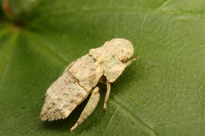ミミズク幼虫s