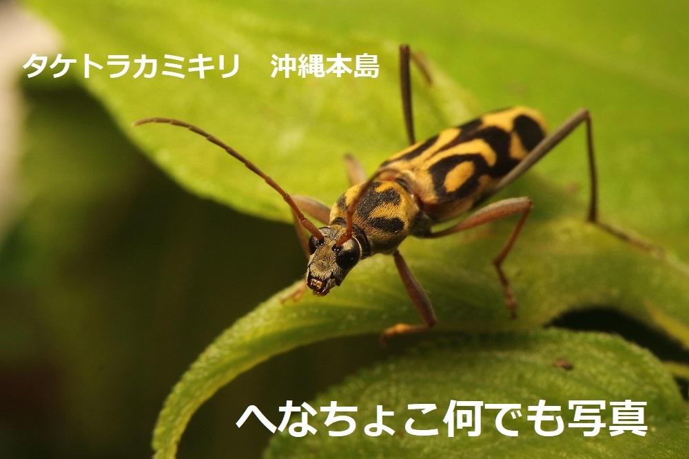タケトラカミキリ