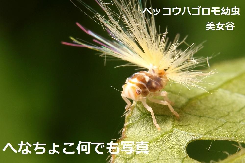 ベッコウハゴロモ幼虫