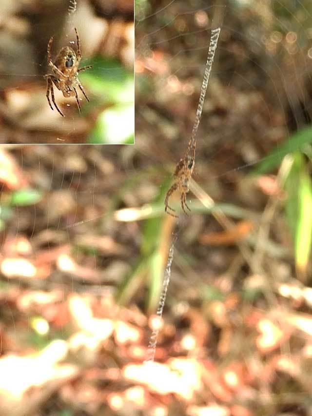 蜘蛛の仲間