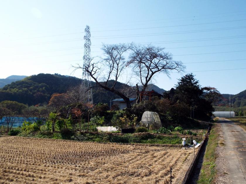 mikuri244e.jpg