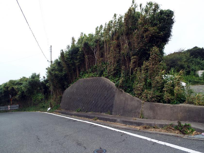 mizuki7nw.jpg