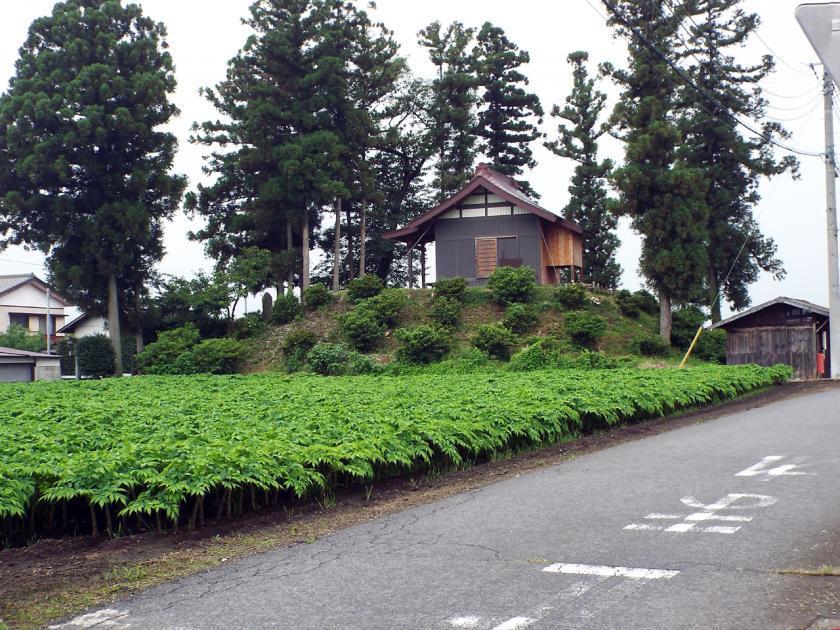 shibukawaootukae.jpg