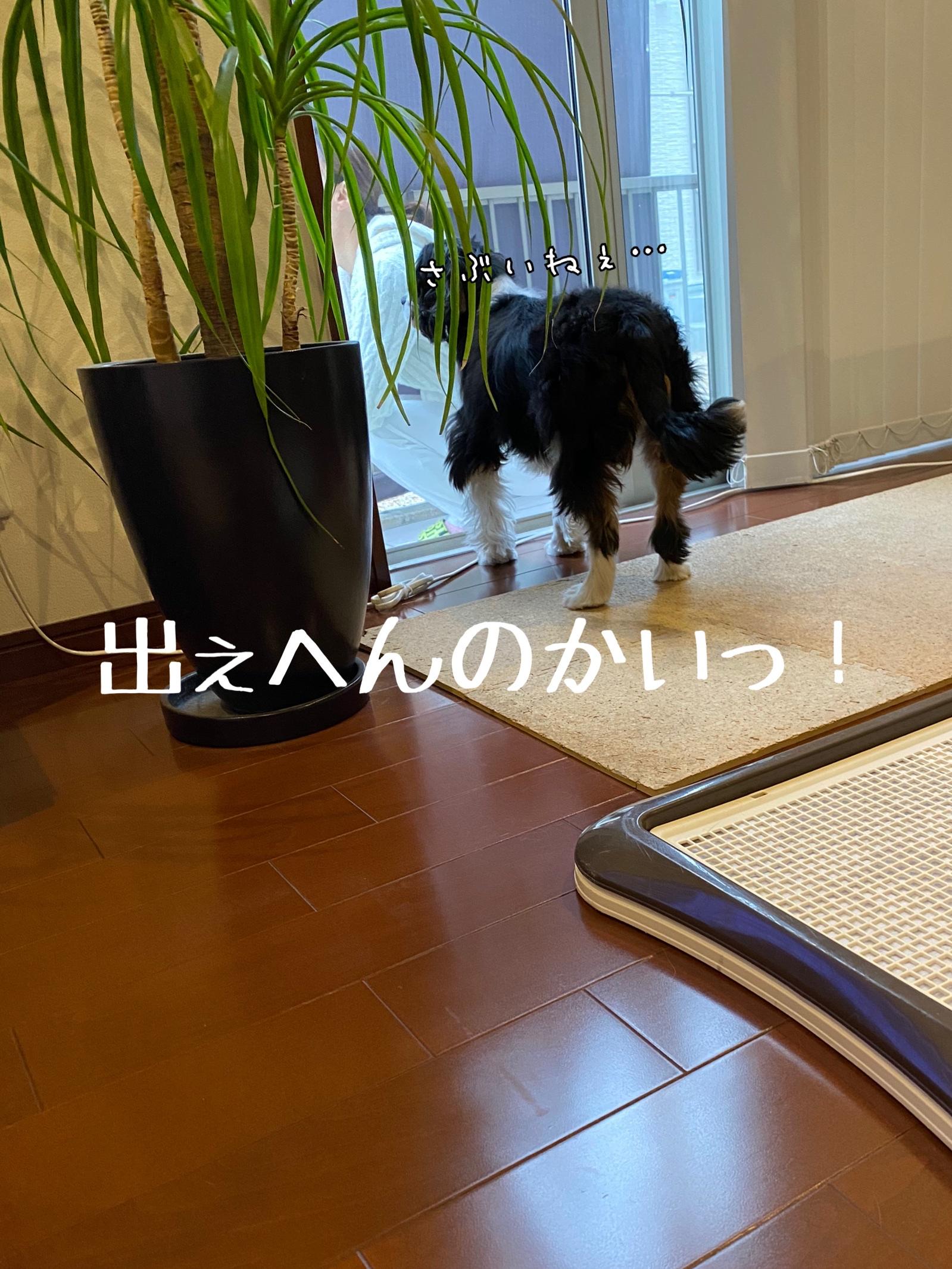 fc2blog_202003150932521cb.jpg