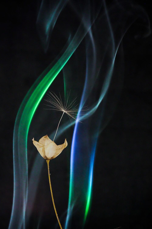 ④⑧P5160916- 煙と綿毛(二重露光)②_R
