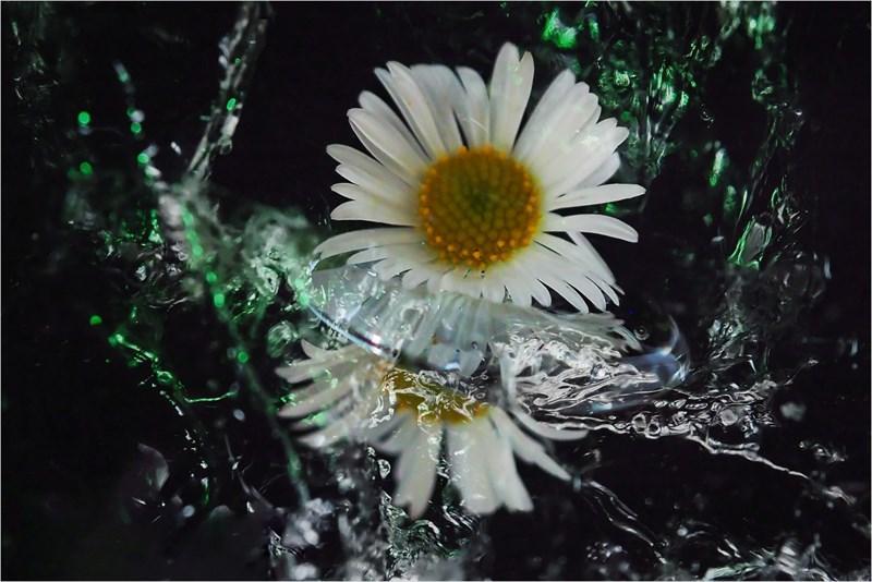 ②P5110101氷と花(枠)_R
