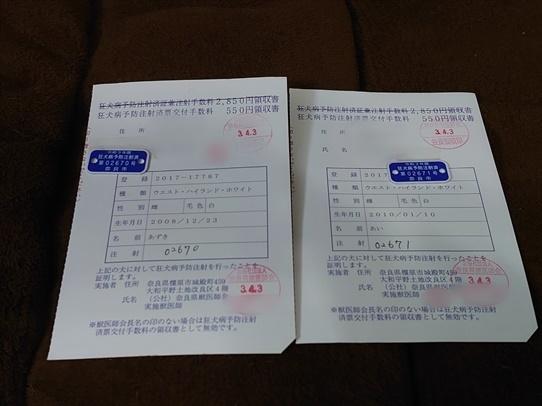 azukiaiharu6.jpg