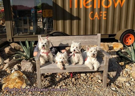cafe1_2020110515095431a.jpg