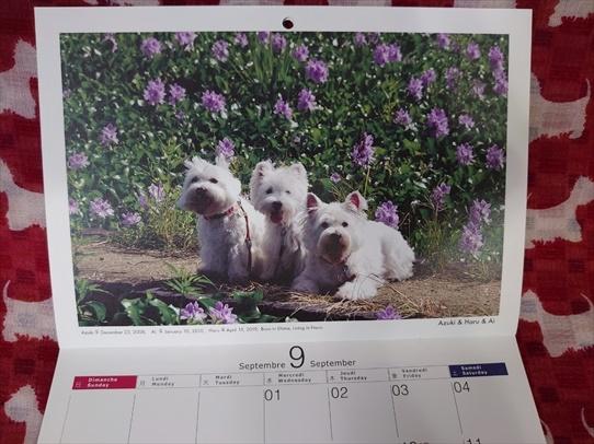 calendar8a.jpg