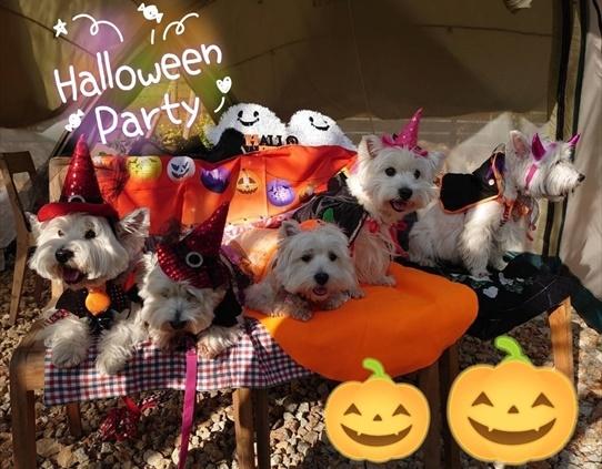 halloween1_202010311855517ac.jpg