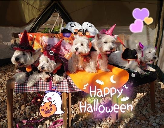 halloween_202010311855516c2.jpg