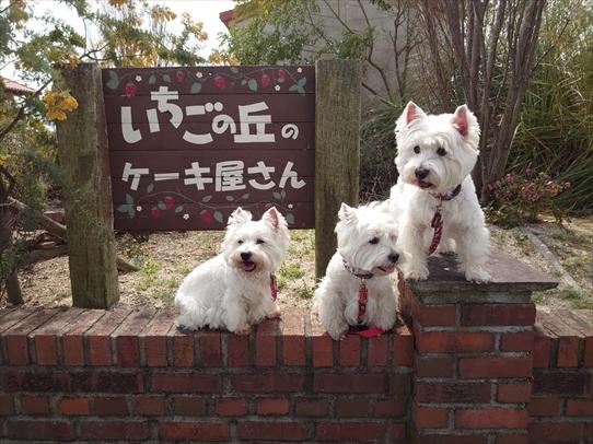 ichigonooka.jpg