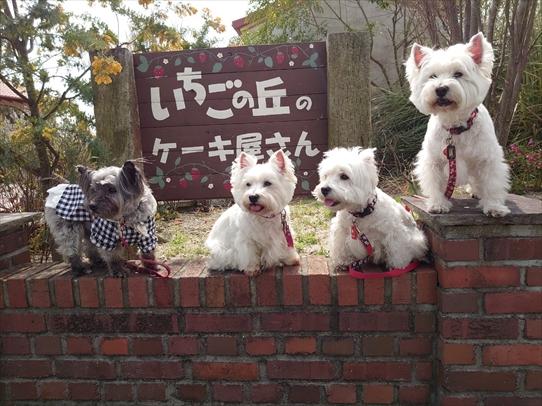 ichigonooka1.jpg