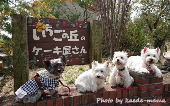 ichigonooka2.jpg