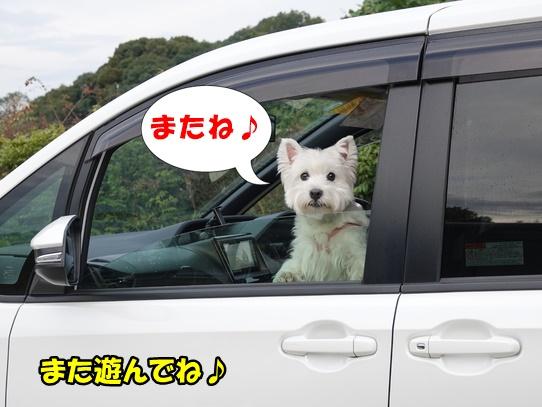 kosumosu10_20201118144805233.jpg