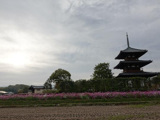 kosumosu9_20201118144805eb4.jpg