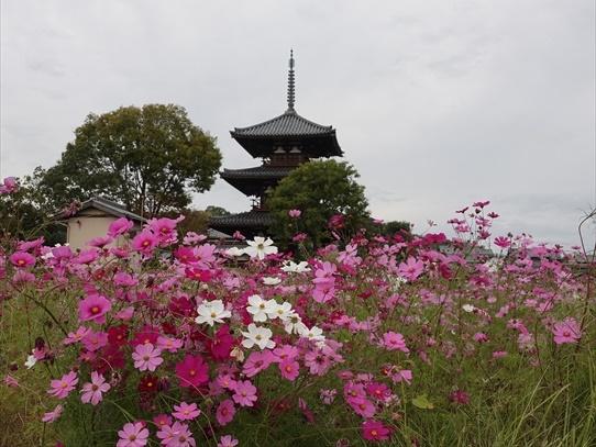 kosumosu_20201118143053612.jpg
