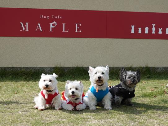 maple.jpg