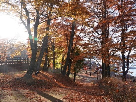 yamanakako14.jpg