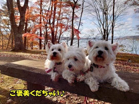 yamanakako8.jpg