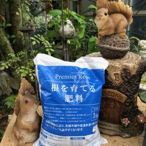ブログ10月1根を育てる肥料