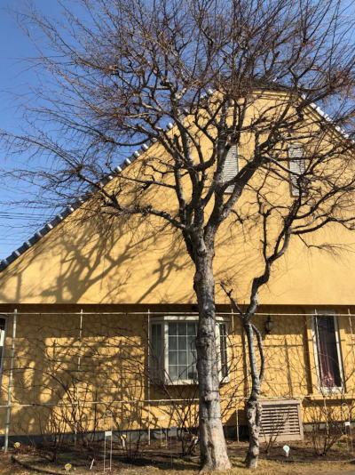 ブログ2月2アンドレエブの庭