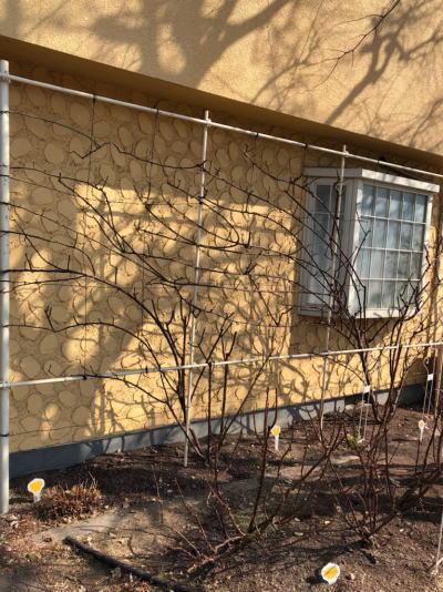 ブログ2月2アンドレエブの庭1