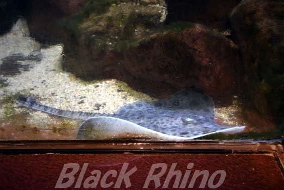 ドブカスベ02 越前松島水族館