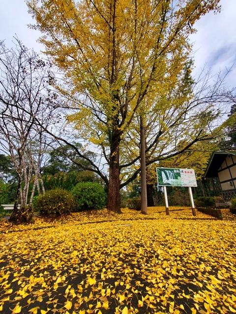曽木の滝紅葉1