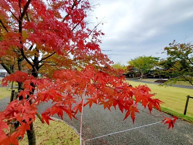曽木の滝紅葉2