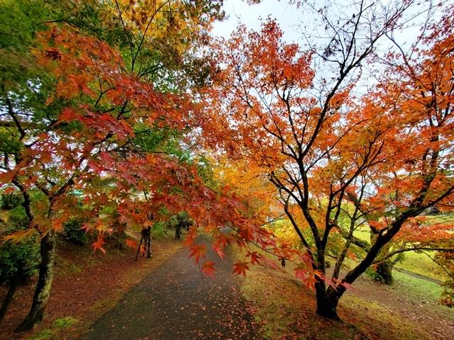 曽木の滝紅葉3
