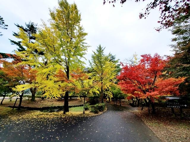 曽木の滝紅葉4