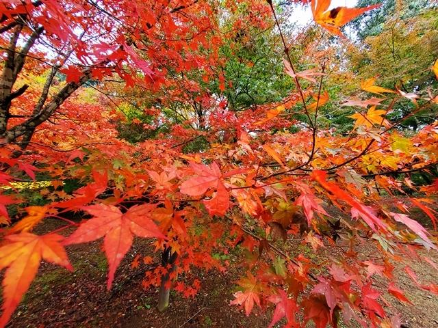 曽木の滝紅葉5