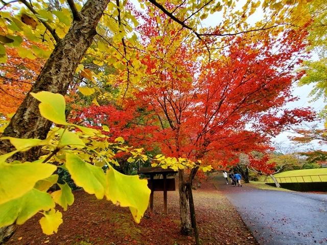 曽木の滝紅葉6