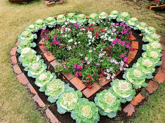 フラワーパーク 菜の花7