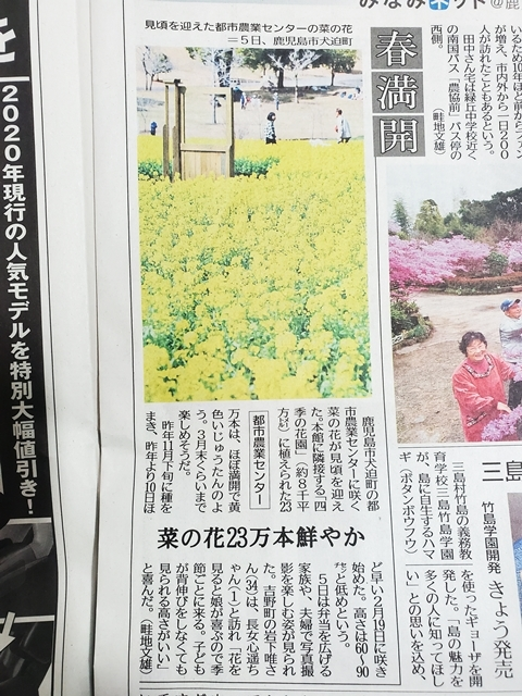 菜の花見頃都市農業