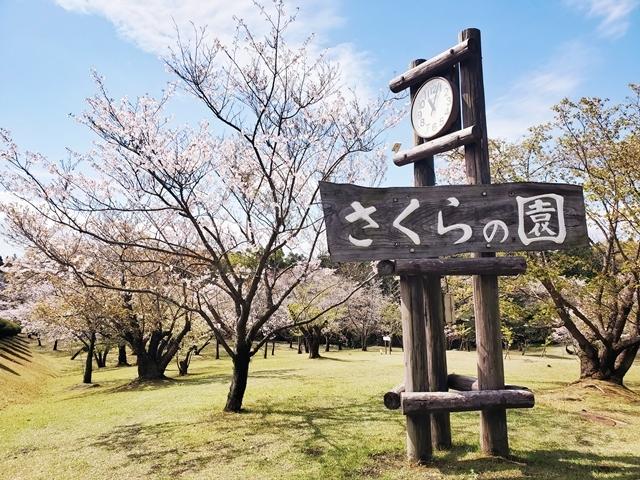 さくらの園1