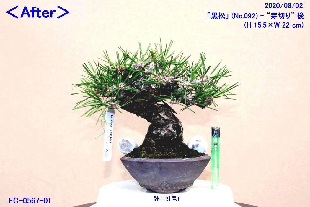FC0567-01.jpg