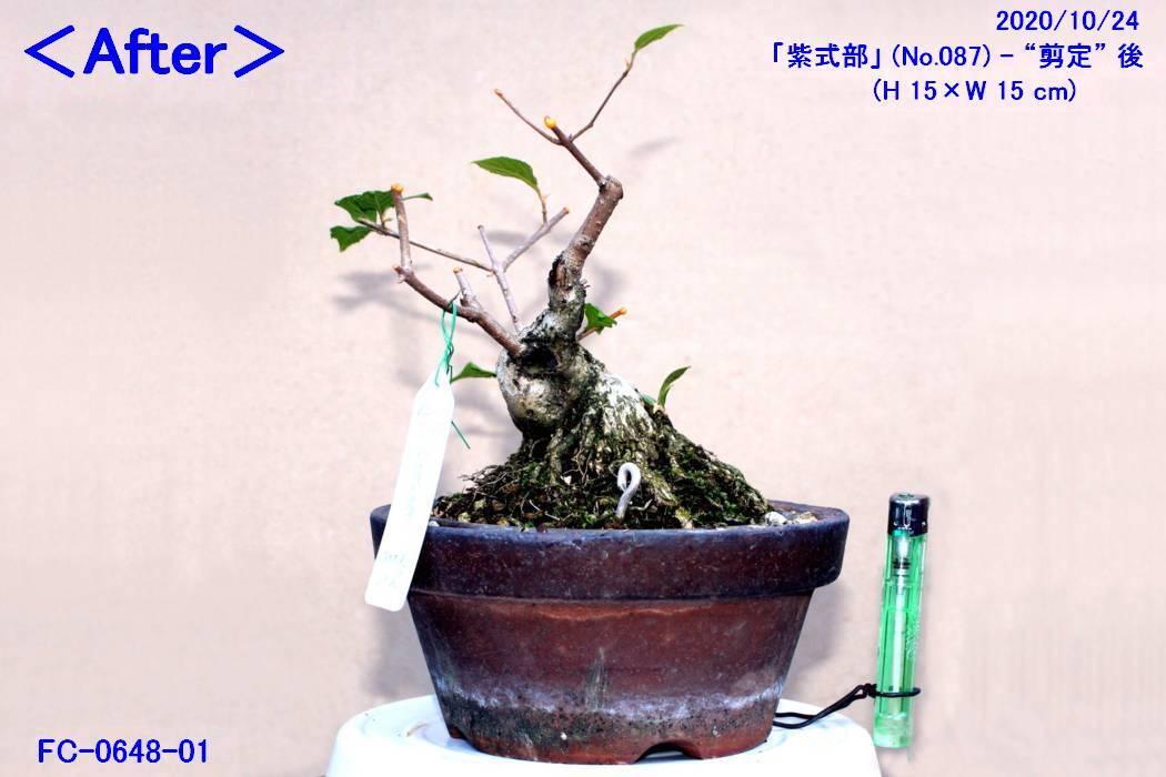 FC0648-01.jpg