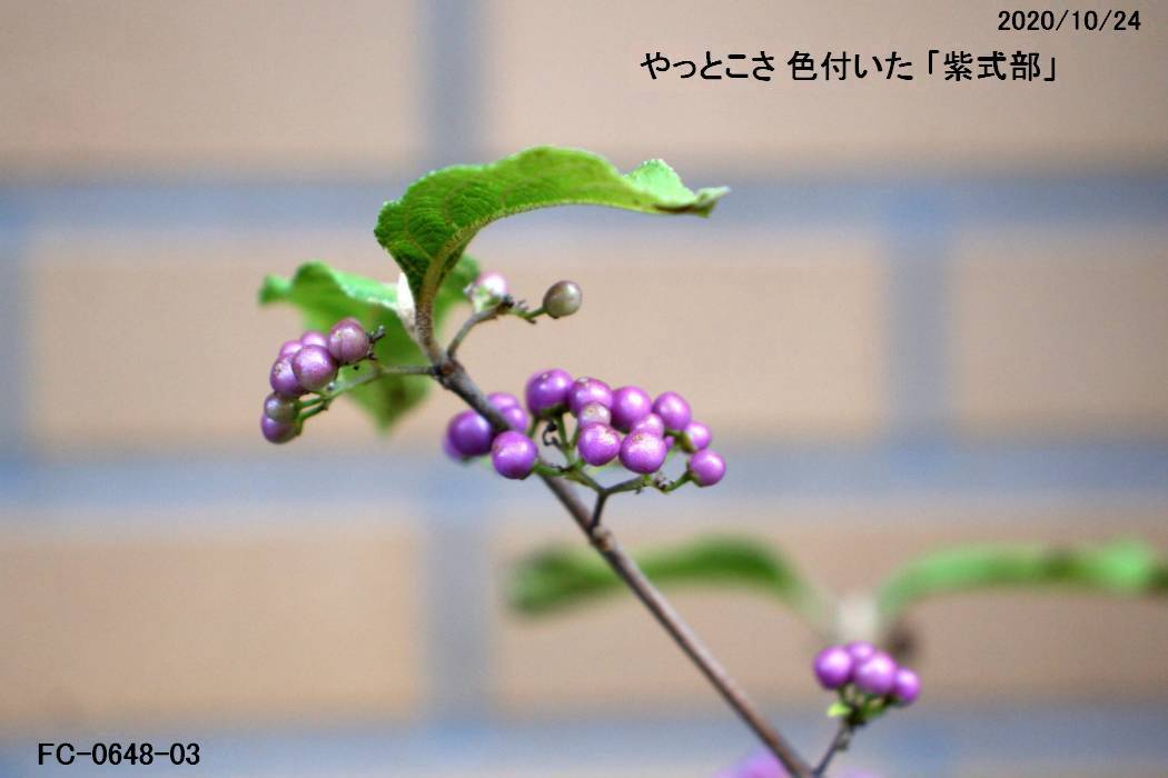 FC0648-03.jpg
