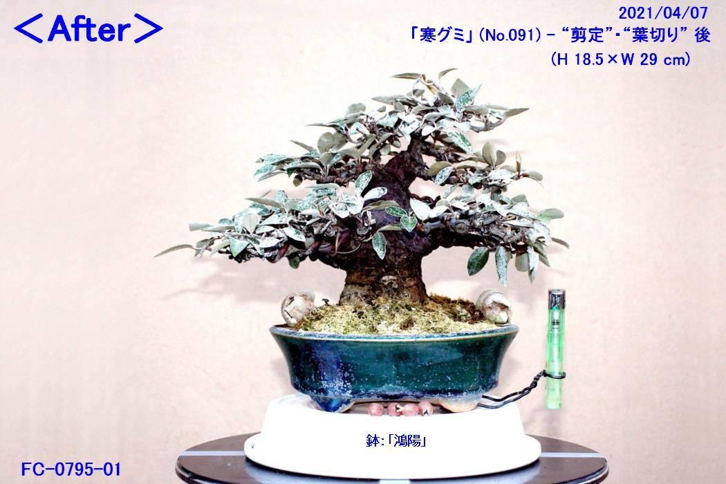 FC0795-01.jpg