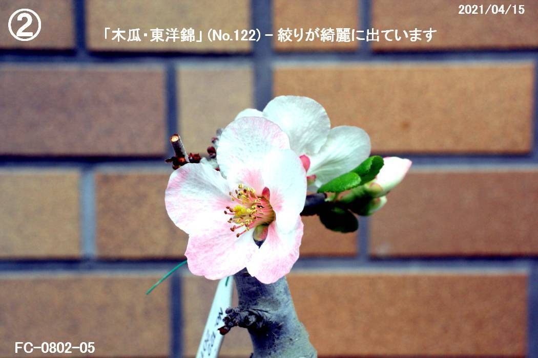FC0802-05.jpg