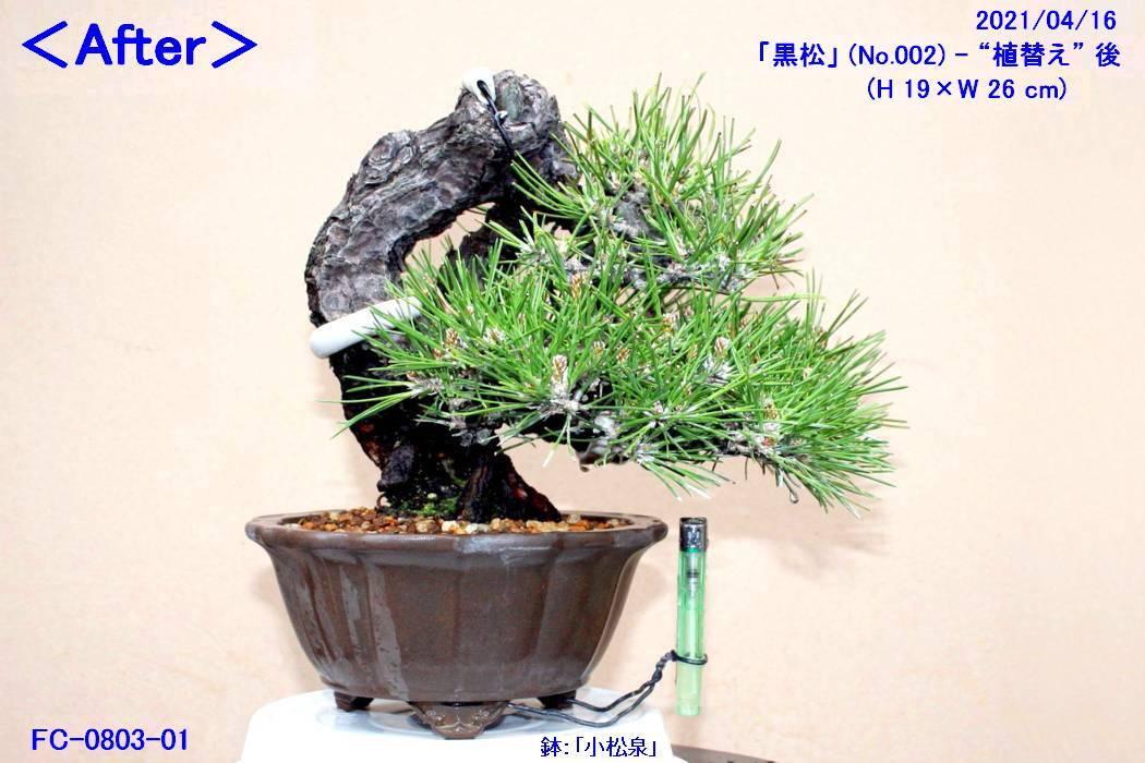 FC0803-01.jpg