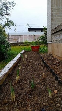 3バルちゃん花壇